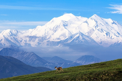 Caribou and Denali