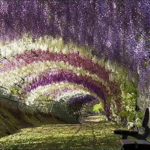 Kawachi Fuji Garden @ Japan admired by our rattan furniture designers.