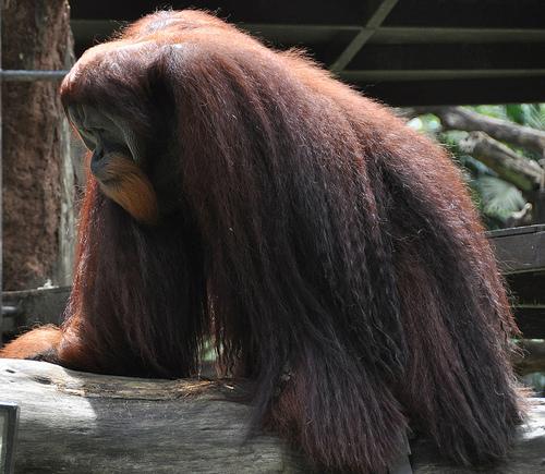 Singapore Zoo & River Safari December 2013 591_edited-1
